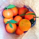 Clementinen frisch aus der Bio-Tüte