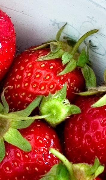 Frische Erdbeeren aus dem Garten in Nostalgie Emaille Schüssel