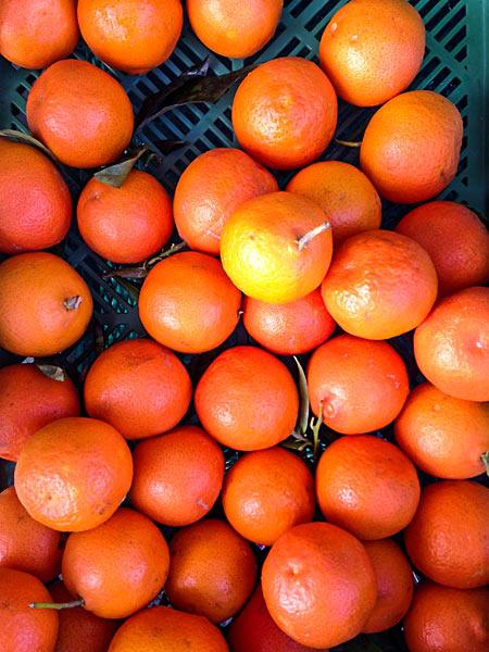 Obstkiste mit Mandarinen bio Früchte