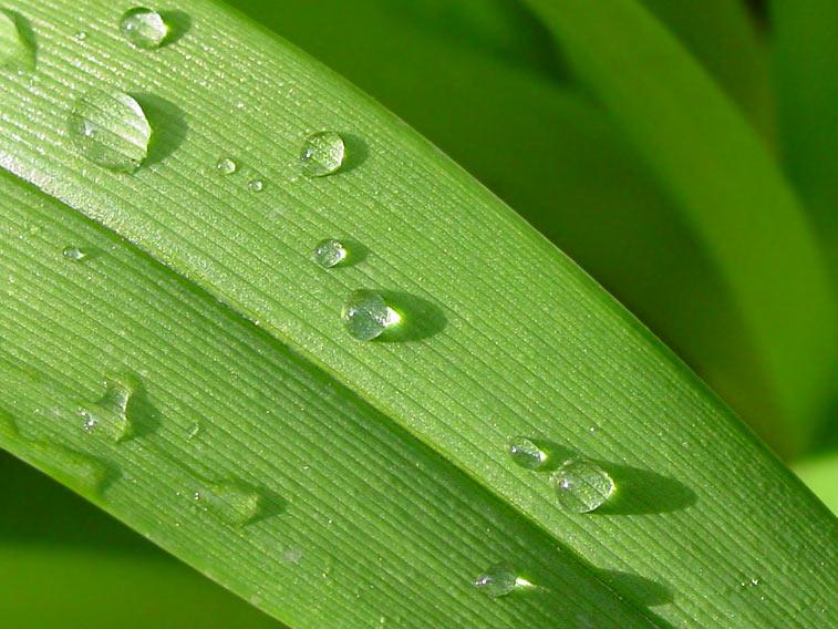Wassertropfen Blatt