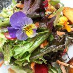 Frühlingssalat Stiefmütterchen Blüten Himbeeren