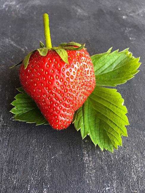 Erdbeere Blätter