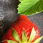 Erdbeere Garten