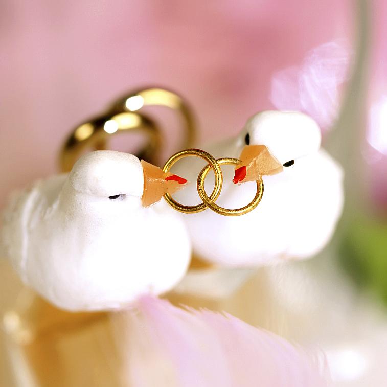 Hochzeitsvögel Tauben Eheringe