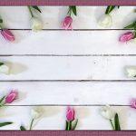 Frühlingsblumen Tulpen Textfeld