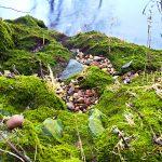 Wasser Rhein-Ufer Moos Kieselsteine