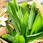 Bärlauch Korb Blüte