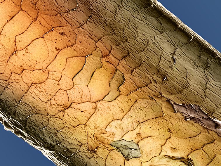 Haar Schuppenschicht mikroskopisch