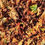 Herbstlaub Herbstblätter