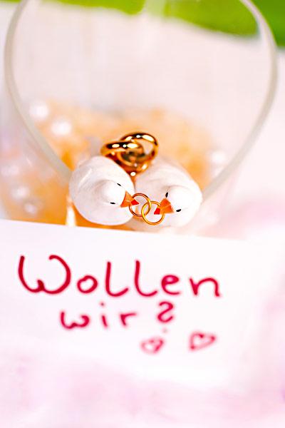Hochzeitstauben Eheringe Brautpaar