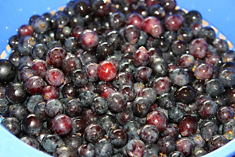 Rote Weintrauben Most