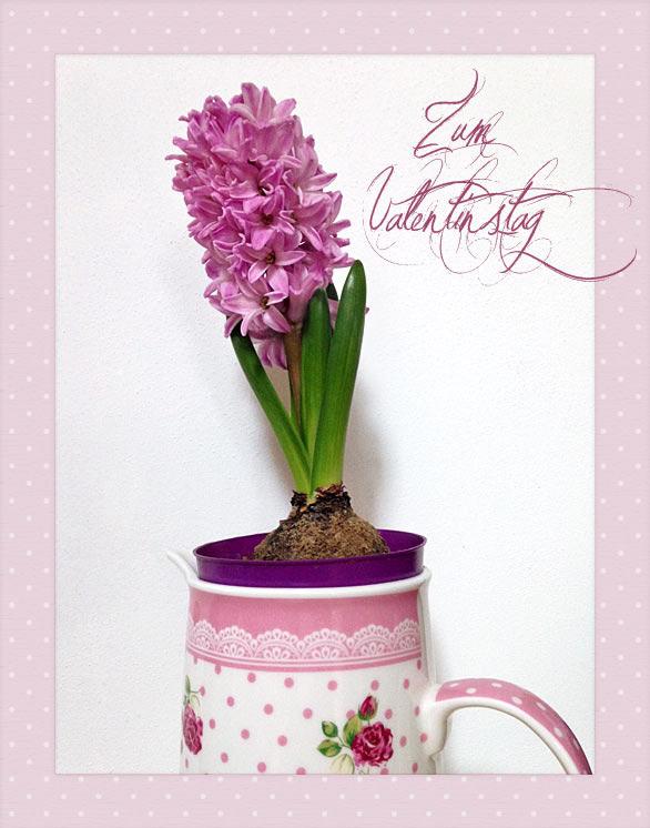 Hyazinthe Frühlingsblumen zum Valentinstag