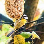 Meise Vogelfutter Winter Vögel füttern Erdnüsse Futterspender