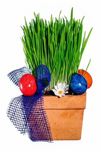 Osternest Ostereier Ostergras Blumentopf Schleife