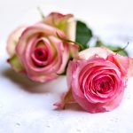 Romantische Vintage Rosen Spitzendecke Muttertag Valentinstag