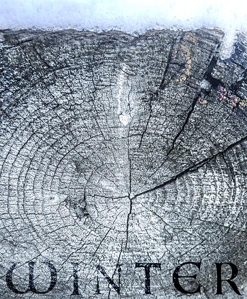 Winter Holz-Hintergrund Baumstamm Eis Schnee Schrift Winter Textplatz