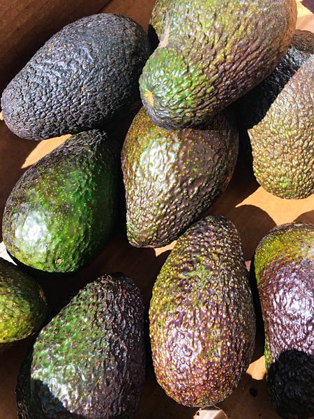 Bio Avocados in einer Kiste