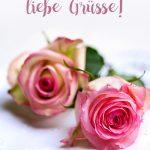 Romantische rosa Rosen-Blüten zum Muttertag liebe Grüsse