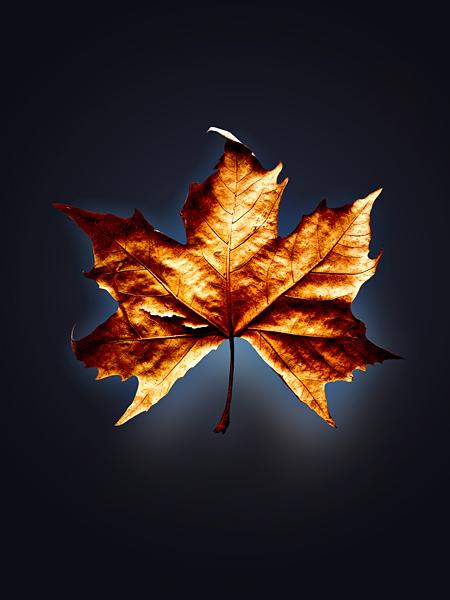 Herbstblatt Weinblatt dunkler Hintergrund