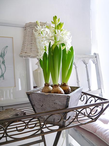 Weisse Landhaus Hyazinthen Frühlingsblumen Shabby Blumentopf