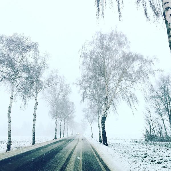 Winterlandschaft Birkenbäume Schnee Eis Landstrasse Baumallee