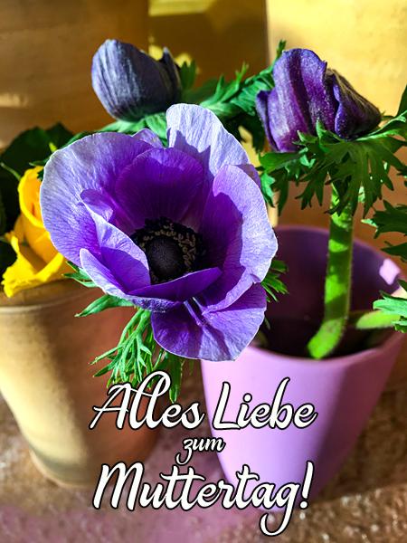 Blumenstrauss alles Liebe zum Muttertag Anemonen Muttertagsgruss