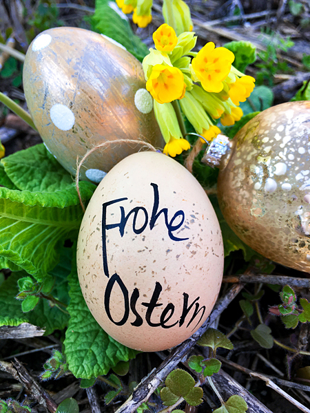 Frohe Ostern Ostereier Schlüsselblumen Osternest