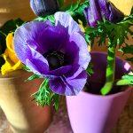 Lila Anemonen Blumen in einer Vase