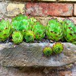 Sukkulenten alte Ziegelsteine Steinmauer Mauersteine Shabby