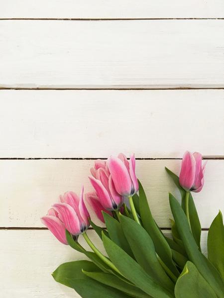 Tulpen Holz Hintergrund Bretterwand Textplatz Shabby
